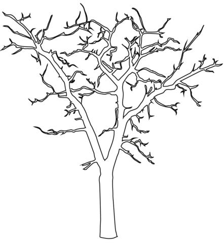 Красивые картинки дерево без листьев - скачать бесплатно для детей 11