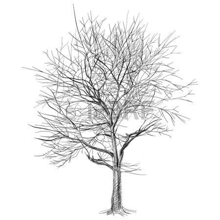 Красивые картинки дерево без листьев - скачать бесплатно для детей 14
