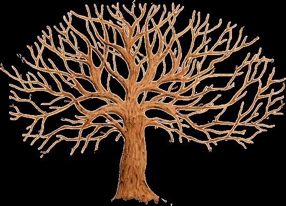Красивые картинки дерево без листьев - скачать бесплатно для детей 9