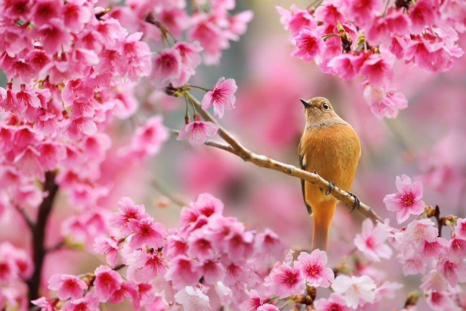 Очень-красивые-картинки-весны---смотреть-или-скачать-бесплатно-1