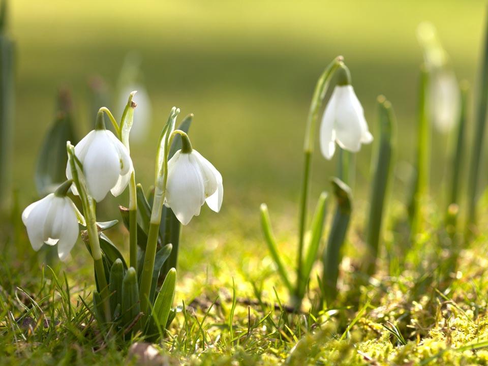 Очень-красивые-картинки-весны---смотреть-или-скачать-бесплатно-11