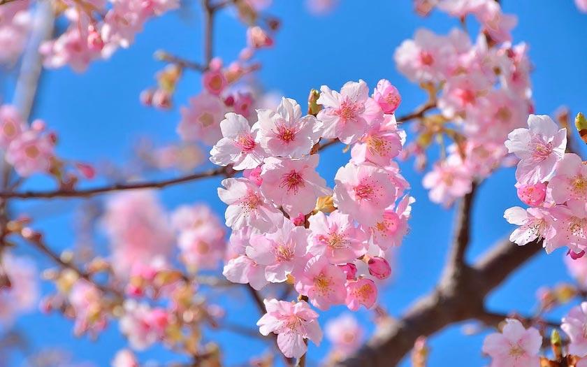 Очень-красивые-картинки-весны---смотреть-или-скачать-бесплатно-12