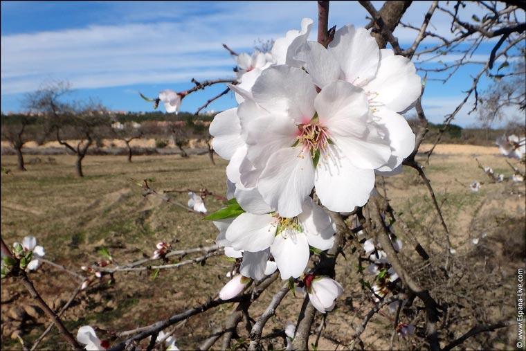 Очень-красивые-картинки-весны---смотреть-или-скачать-бесплатно-13