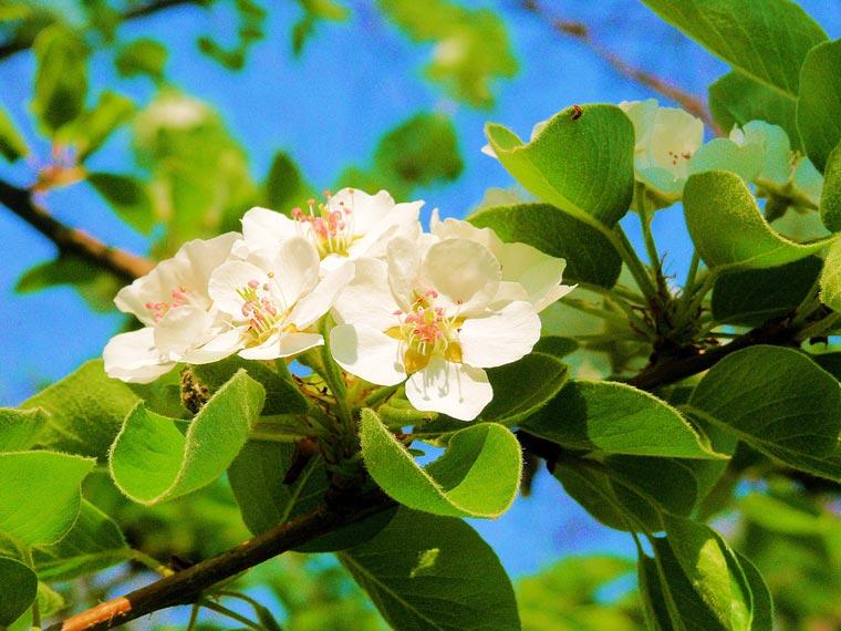 Очень-красивые-картинки-весны---смотреть-или-скачать-бесплатно-14