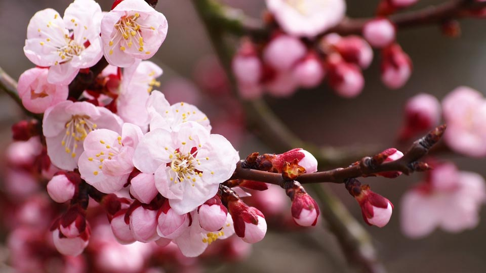 Очень-красивые-картинки-весны---смотреть-или-скачать-бесплатно-15