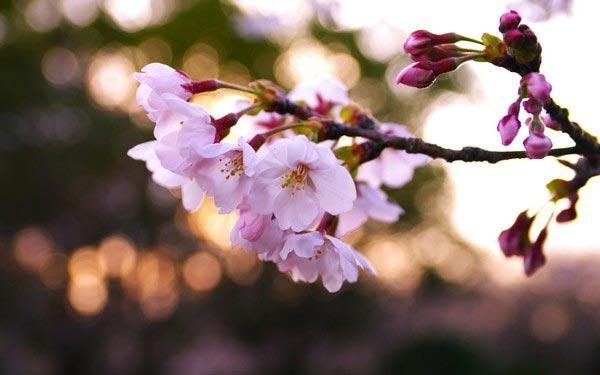 Очень-красивые-картинки-весны---смотреть-или-скачать-бесплатно-16