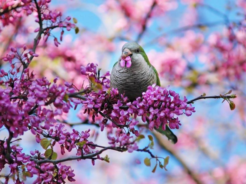 Очень-красивые-картинки-весны---смотреть-или-скачать-бесплатно-17