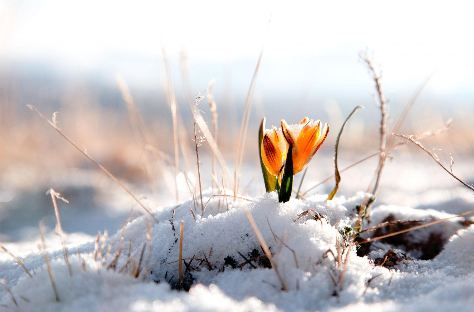 Очень красивые картинки весны - смотреть или скачать бесплатно 18