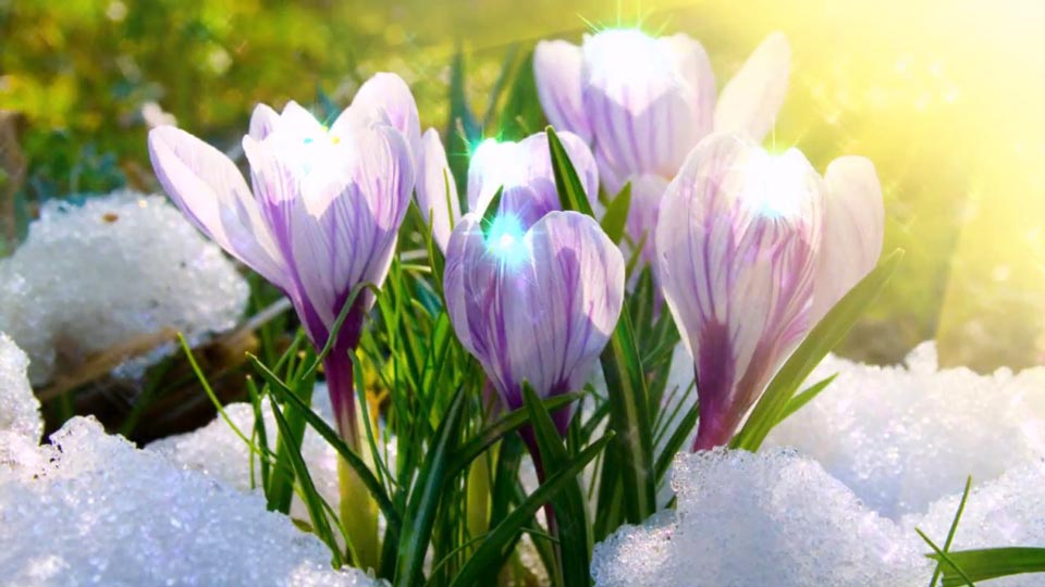 Очень-красивые-картинки-весны---смотреть-или-скачать-бесплатно-2
