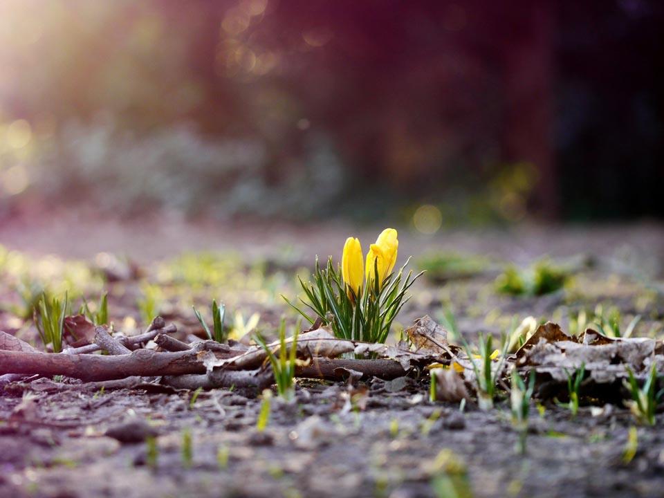 Очень-красивые-картинки-весны---смотреть-или-скачать-бесплатно-3