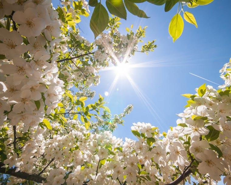 Очень-красивые-картинки-весны---смотреть-или-скачать-бесплатно-4