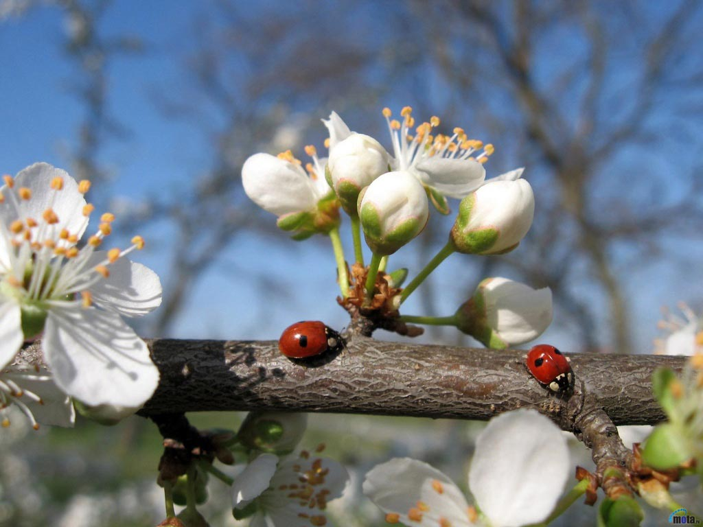 Очень-красивые-картинки-весны---смотреть-или-скачать-бесплатно-6