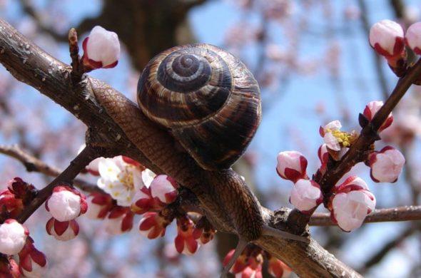 Очень-красивые-картинки-весны---смотреть-или-скачать-бесплатно-7
