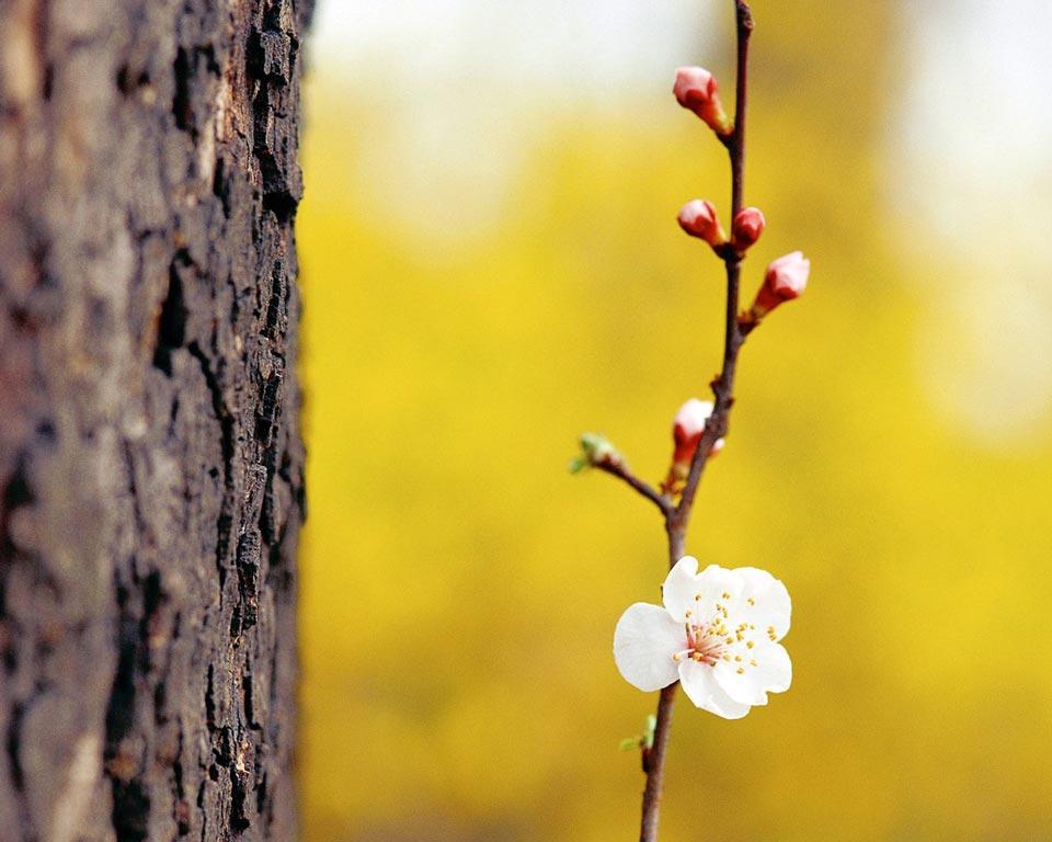 Очень-красивые-картинки-весны---смотреть-или-скачать-бесплатно-8