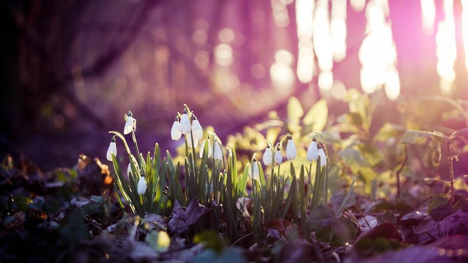 Очень-красивые-картинки-весны---смотреть-или-скачать-бесплатно-9