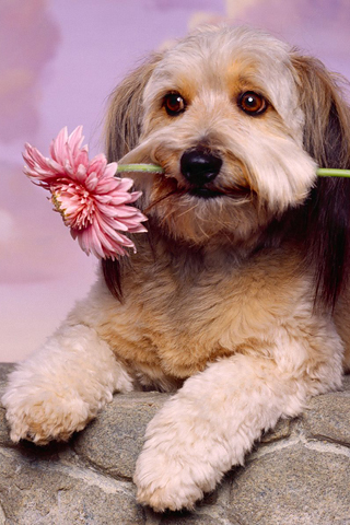 Прикольные картинки на телефон собаки и щенки - очень крутые 10