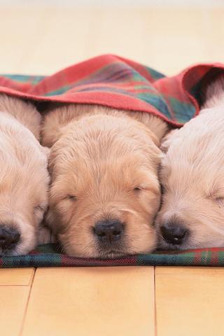 Прикольные картинки на телефон собаки и щенки - очень крутые 12
