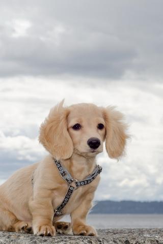 Прикольные картинки на телефон собаки и щенки - очень крутые 13