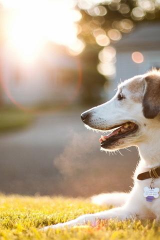 Прикольные картинки на телефон собаки и щенки - очень крутые 14