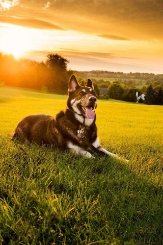 Прикольные картинки на телефон собаки и щенки - очень крутые 15