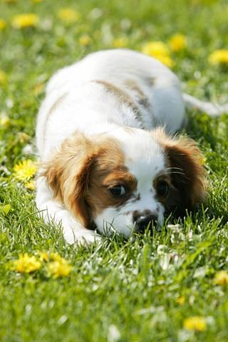 Прикольные картинки на телефон собаки и щенки - очень крутые 16