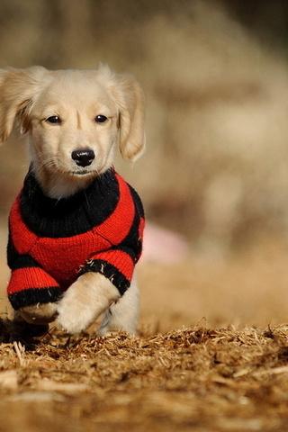 Прикольные картинки на телефон собаки и щенки - очень крутые 17