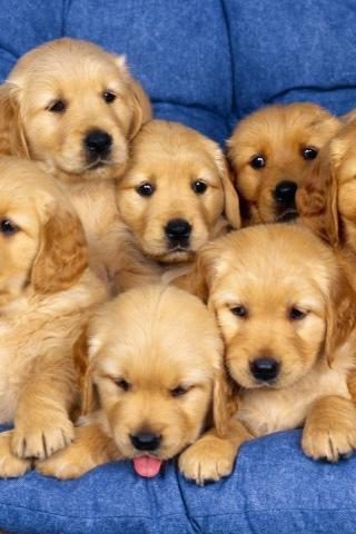 Прикольные картинки на телефон собаки и щенки - очень крутые 18