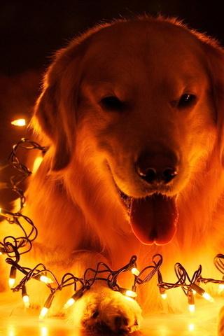Прикольные картинки на телефон собаки и щенки - очень крутые 19