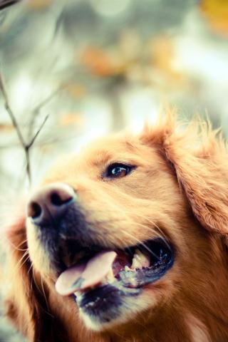 Прикольные картинки на телефон собаки и щенки - очень крутые 2