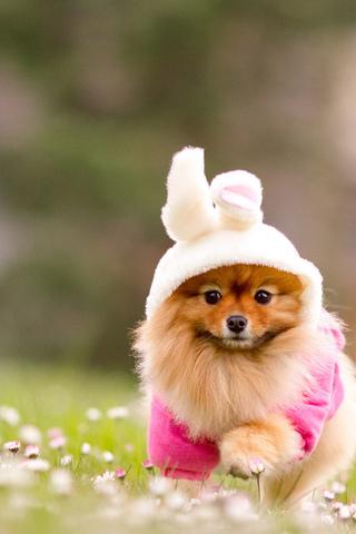 Прикольные картинки на телефон собаки и щенки - очень крутые 20