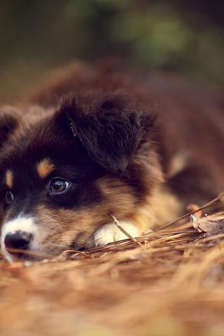 Прикольные картинки на телефон собаки и щенки - очень крутые 3