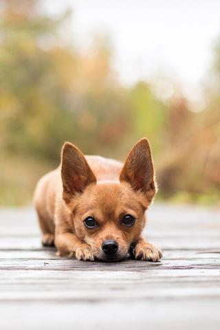 Прикольные картинки на телефон собаки и щенки - очень крутые 4