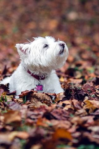 Прикольные картинки на телефон собаки и щенки - очень крутые 5
