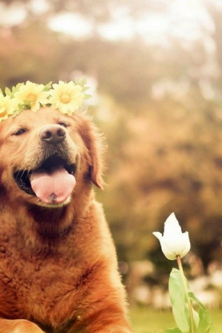 Прикольные картинки на телефон собаки и щенки - очень крутые 6
