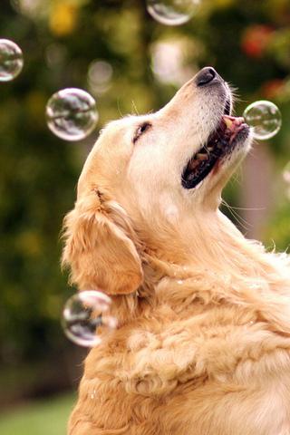 Прикольные картинки на телефон собаки и щенки - очень крутые 7