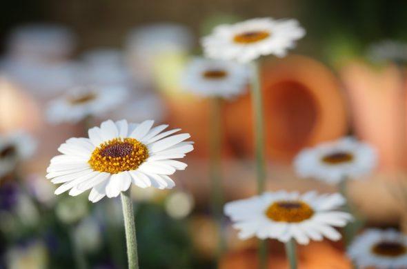 Самые красивые цветы и букеты - картинки и изображения 1