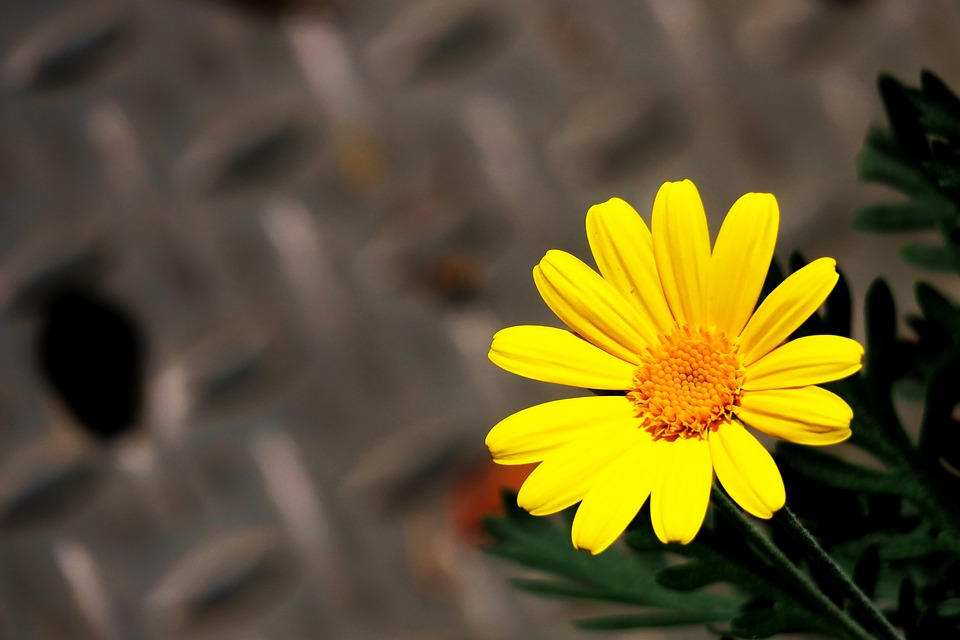 Самые красивые цветы и букеты - картинки и изображения 11