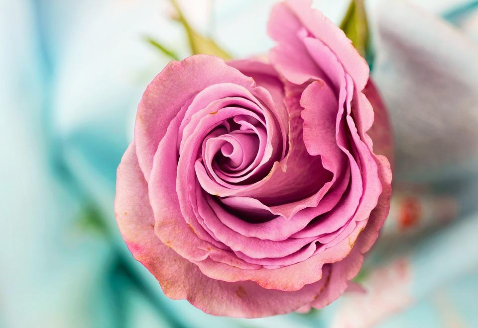Самые красивые цветы и букеты - картинки и изображения 14
