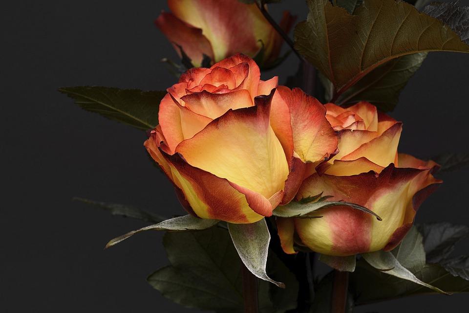 Самые красивые цветы и букеты - картинки и изображения 15