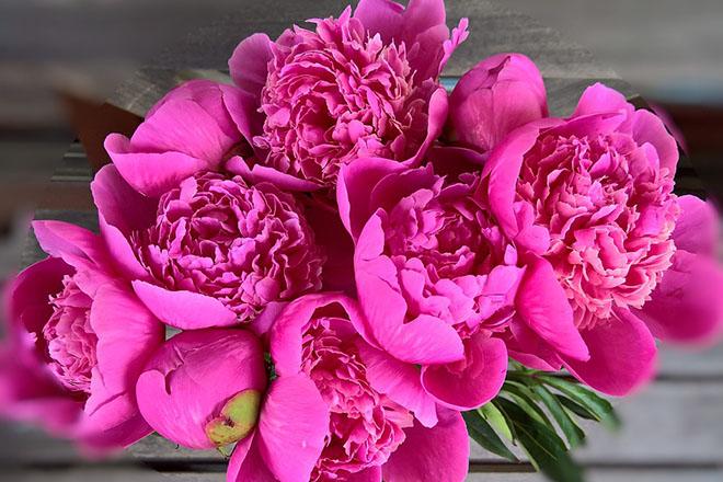 Самые красивые цветы и букеты - картинки и изображения 5