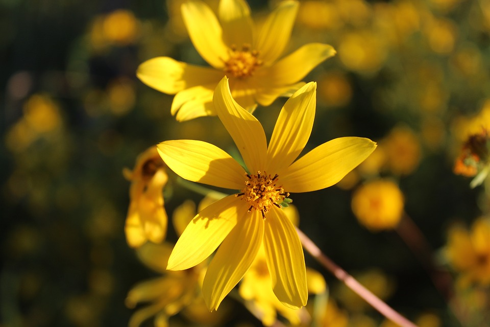 Самые красивые цветы и букеты - картинки и изображения 6
