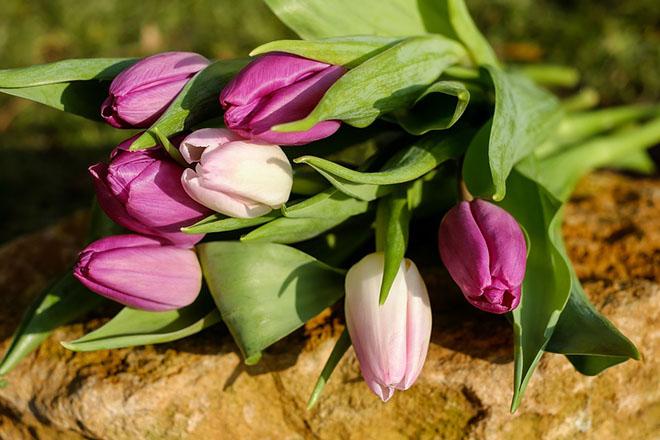 Самые красивые цветы и букеты - картинки и изображения 9