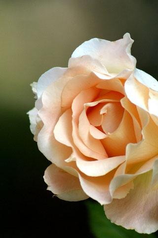 Скачать картинки на телефон цветы и букеты - самые прекрасные 10