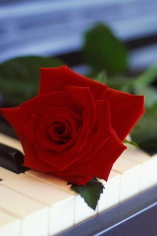 Скачать картинки на телефон цветы и букеты - самые прекрасные 11