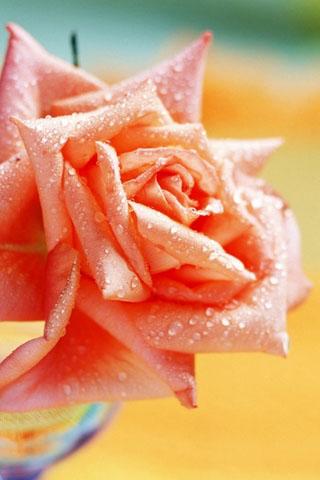 Скачать картинки на телефон цветы и букеты - самые прекрасные 12