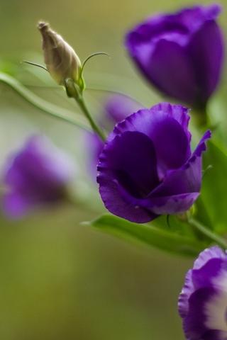 Скачать картинки на телефон цветы и букеты - самые прекрасные 17