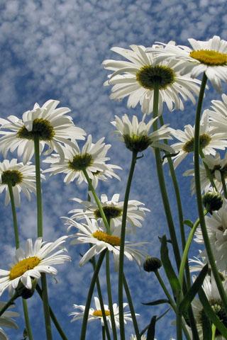 Скачать картинки на телефон цветы и букеты - самые прекрасные 2