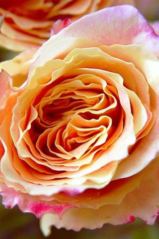 Скачать картинки на телефон цветы и букеты - самые прекрасные 4