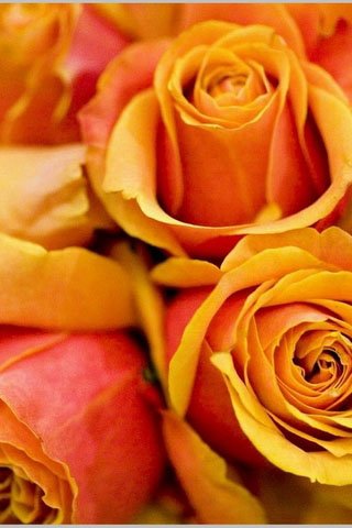 Скачать картинки на телефон цветы и букеты - самые прекрасные 5