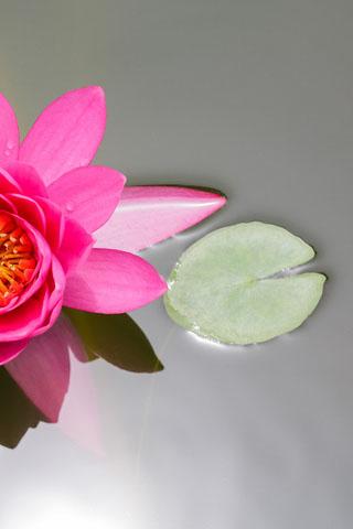 Скачать картинки на телефон цветы и букеты - самые прекрасные 8